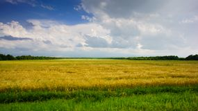 Cielo azul con las nubes sobre campo del trigo de oro Fotos de archivo