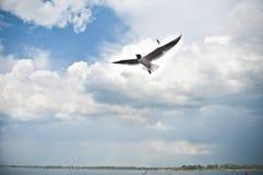 Cielo azul con las nubes y las gaviotas Imagen de archivo