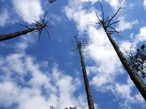 cielo azul con las nubes y los árboles Imagen de archivo