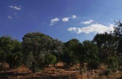 Cielo azul con los árboles Imagenes de archivo