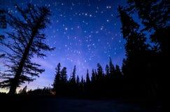 Cielo azul con muchos estrellas que centellean en bosque Foto de archivo