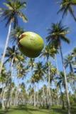 Cielo azul de la arboleda de las palmeras del coco que cae Foto de archivo libre de regalías