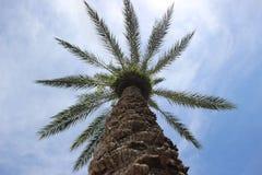Cielo azul de la palmera Foto de archivo libre de regalías