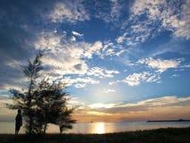 Cielo azul de la silueta del árbol Imágenes de archivo libres de regalías