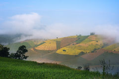 Cielo azul de la terraza del campo del arroz Fotos de archivo