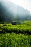 Cielo azul de la terraza del campo del arroz Imagen de archivo