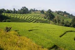 Cielo azul de la terraza del campo del arroz Foto de archivo