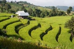 Cielo azul de la terraza del campo del arroz Foto de archivo libre de regalías
