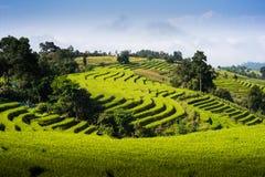 Cielo azul de la terraza del campo del arroz Fotos de archivo libres de regalías