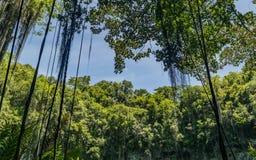 Cielo azul de la vegetación verde Fotografía de archivo libre de regalías