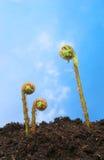 Cielo azul de las frondas del helecho Foto de archivo libre de regalías
