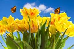 Cielo azul de las mariposas de los tulipanes Imágenes de archivo libres de regalías