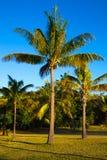 Cielo azul de las palmas de Goazon fotos de archivo