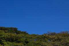 Cielo azul de los árboles Fotos de archivo libres de regalías