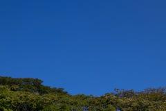 Cielo azul de los árboles Foto de archivo libre de regalías