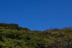 Cielo azul de los árboles Fotografía de archivo