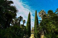 Cielo azul de los árboles del verde del parque de la ciudad imágenes de archivo libres de regalías
