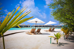 Cielo azul de los arbustos de los shezlongs de la playa de Maldivas Imagen de archivo