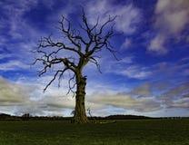 Cielo azul del árbol muerto ningunas hojas Foto de archivo