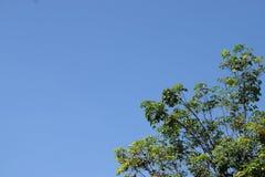 Cielo azul del árbol y del claro foto de archivo