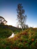 Cielo azul del abedul de río del paisaje del otoño de la mañana Imágenes de archivo libres de regalías