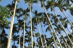 Cielo azul del bosque de la palma tropical Imagen de archivo libre de regalías