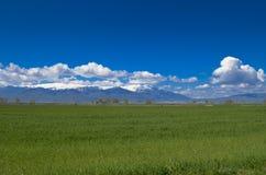 Cielo azul del campo verde Imágenes de archivo libres de regalías