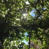 Cielo azul del día soleado detrás de la uva Fotos de archivo libres de regalías