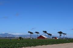 Cielo azul del granero de los trabajadores de granja de Castroville California de las colinas costeras rojas de los árboles fotos de archivo