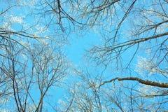 Cielo azul del invierno y ramas de árbol Imágenes de archivo libres de regalías