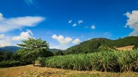 Cielo azul del país de la plantación rural verde baja de las colinas Imagenes de archivo