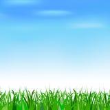 Cielo azul e hierba Imagenes de archivo