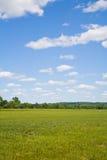 Cielo azul e hierba verde Fotos de archivo libres de regalías