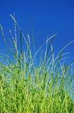 Cielo azul e hierba verde fotos de archivo