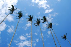 Cielo azul en día ventoso Imagen de archivo