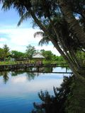 Cielo azul en la granja del cocodrilo de Miri, Borneo, Malasia foto de archivo
