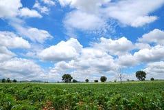 Cielo azul en un día imagenes de archivo