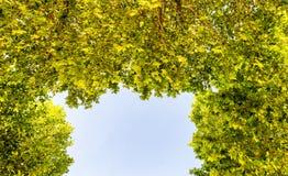 Cielo azul enmarcado por las hojas verdes del árbol Foto de archivo