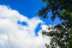 Cielo azul, nubes blancas, hojas verdes imagenes de archivo