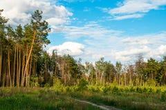 Cielo azul, nubes y árboles forestales Fotos de archivo libres de regalías