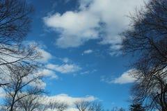 Cielo azul, nubes y luna enmarcados por los árboles altos fotos de archivo