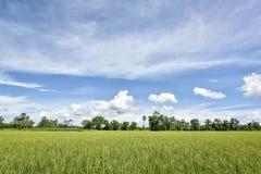 Cielo azul nublado del campo del arroz Imagenes de archivo