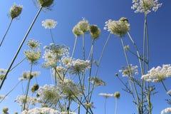 Cielo azul Plantas contra el cielo El sol del verano Las plantas están floreciendo Humor del verano fotos de archivo