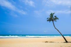 Cielo azul, playa blanca de la arena, mar y una palmera del coco Imágenes de archivo libres de regalías
