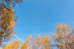 Cielo azul rodeado por los abedules Fotos de archivo libres de regalías