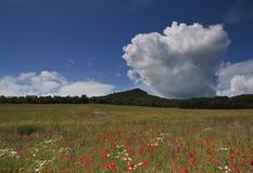 Cielo azul sobre campo de flor abierto imagen de archivo