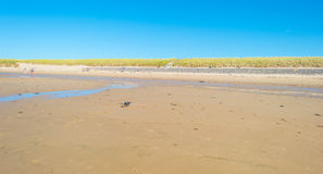 Cielo azul sobre una playa a lo largo del mar Foto de archivo libre de regalías