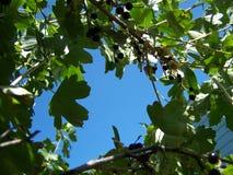 Cielo azul a través del arbusto actual foto de archivo