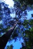 Cielo azul y árbol Imagen de archivo libre de regalías