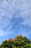 Cielo azul y árbol foto de archivo